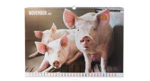 Zoetis Schwein Kalender November