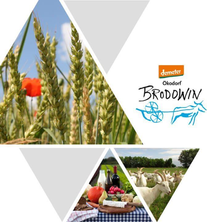 Blog plantamedium Storytelling Brodwin