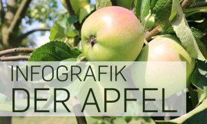 """Infografik """"Der Apfel"""""""
