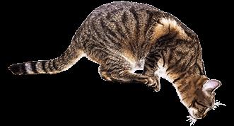 Eine Katze lauert auf den Sprung