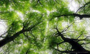 Was man für die klimaneutrale Produktion von Verpackungen bedenken sollte